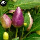 Buy Color Ornamental Pepper Seeds 200pcs Plant Garden Pepper