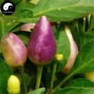 Buy Color Ornamental Pepper Seeds 200pcs Plant Garden Pepper