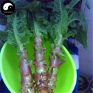 Buy Red Lettuce Vegetable Seeds 200pcs Plant Chinese Lactuca Sativa Wo Ju