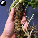 Buy Japanese Wasabia Vegetable Seeds 400pcs Plant Eutrema Mustard Jie Mo