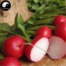 Buy Cherry Radish Vegetable Seeds 150pcs Plant Fruit Red Radish