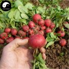 Buy Cherry Radish Vegetable Seeds 300pcs Plant Fruit Red Radish
