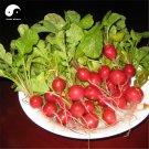 Buy Cherry Radish Vegetable Seeds 600pcs Plant Fruit Red Radish
