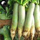 Buy Green Radish Vegetable Seeds 800pcs Plant Fruit Radish