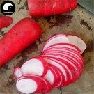 Buy Red Water Radish Vegetable Seeds 200pcs Plant Fruit Radish