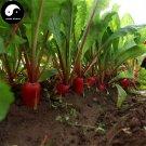 Buy Red Water Radish Vegetable Seeds 800pcs Plant Fruit Radish