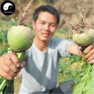 Buy Water Radish Vegetable Seeds 200pcs Plant Red Heart Green Skin Fruit Radish