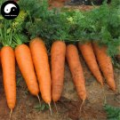 Buy Red Carrot Vegetable Seeds 600pcs Plant Daucus Carota Garden