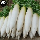 Buy White Long Radish Vegetable Seeds 1200pcs Plant Raphanus Sativus Garden