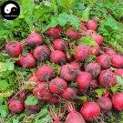 Buy Red Round Radish Vegetable Seeds 1200pcs Plant Raphanus Sativus Garden