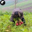 Buy Red Round Radish Vegetable Seeds 600pcs Plant Raphanus Sativus Garden