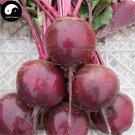 Buy Beta Vulgaris Vegetable Seeds 800pcs Plant Root Vegetables Red Sugar Beet