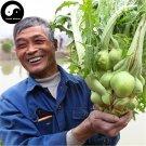 Buy Brassica Juncea Vegetable Seeds 200pcs Plant Root Vegetables Mustard Buds