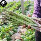 Buy Green Asparagus Vegetable Seeds 60pcs Plant Buds Vegetables Asparagus Officinalis