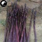 Buy Purple Asparagus Vegetable Seeds 120pcs Plant Buds Vegetables Asparagus Officinalis