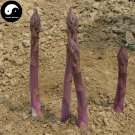 Buy Purple Asparagus Vegetable Seeds 60pcs Plant Buds Vegetables Asparagus Officinalis