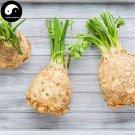 Buy Root Cilantro Vegetable Seeds 400pcs Plant Parsley Vegetables Coriandrum Sativum
