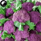 Buy Purple Cauliflower Vegetable Seeds 400pcs Plant Rare Broccoli Vegetables