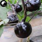 Buy Purple Round Eggplant Vegetable Seeds 300pcs Plant Eggplant Vegetables Solanum Melongena