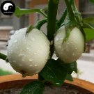 Buy White Round Eggplant Vegetable Seeds 60pcs Plant Eggplant Vegetables Solanum Melongena