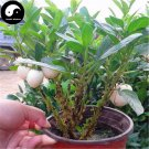Buy White Round Eggplant Vegetable Seeds 240pcs Plant Eggplant Vegetables Solanum Melongena