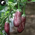 Buy Color Eggplant Vegetable Seeds 60pcs Plant Eggplant Vegetables Solanum Melongena