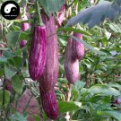 Buy Color Eggplant Vegetable Seeds 120pcs Plant Eggplant Vegetables Solanum Melongena