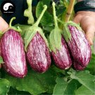 Buy Color Eggplant Vegetable Seeds 240pcs Plant Eggplant Vegetables Solanum Melongena