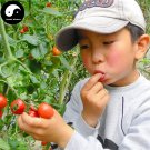 Buy Red Cherry Tomatoes Vegetable Seeds 200pcs Plant Fruit Cherry Tomatoes