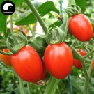Buy Red Cherry Tomatoes Vegetable Seeds 400pcs Plant Fruit Cherry Tomatoes