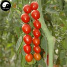 Buy Red Cherry Tomatoes Vegetable Seeds 800pcs Plant Fruit Cherry Tomatoes