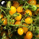 Buy Yellow Cherry Tomatoes Vegetable Seeds 800pcs Plant Fruit Cherry Tomatoes