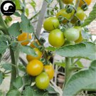 Buy Yellow Cherry Tomatoes Vegetable Seeds 400pcs Plant Fruit Cherry Tomatoes