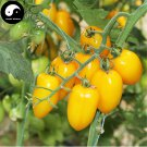 Buy Yellow Cherry Tomatoes Vegetable Seeds 200pcs Plant Fruit Cherry Tomatoes
