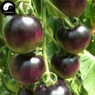 Buy Purple Cherry Tomatoes Vegetable Seeds 400pcs Plant Fruit Cherry Tomatoes