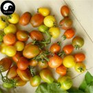 Buy Color Cherry Tomatoes Vegetable Seeds 800pcs Plant Fruit Cherry Tomatoes