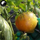 Buy Color Tomatoes Vegetable Seeds 200pcs Plant Chinese Fruit Tomatoes