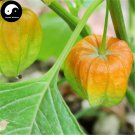 Buy Physalis Pubescens Fruits Seeds 400pcs Plant Chinese Lantern Fruit Cherry