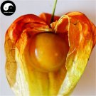 Buy Physalis Pubescens Fruits Seeds 100pcs Plant Chinese Lantern Fruit Cherry