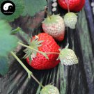 Buy Red Milk Strawberry Fruit Seeds 200pcs Plant Chinese Fruit Strawberries