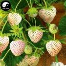 Buy White Milk Strawberry Fruit Seeds 600pcs Plant Chinese Fruit Strawberries