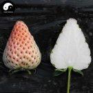Buy White Milk Strawberry Fruit Seeds 150pcs Plant Chinese Fruit Strawberries