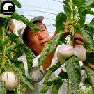 Buy Melon Eggplant Fruit Seeds 60pcs Plant Ginseng Fruit Solanum Muricatum Aiton