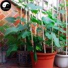 Buy Cucumber Gourd Vegetable Seeds 200pcs Plant Cucumis Sativus Fruit Melon