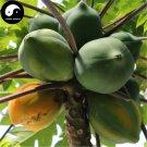 Buy Papaya Fruit Seeds 60pcs Plant Pawpaw Fruit Tree Chaenomeles Sinensis