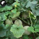 Buy Cantaloupe Fruit Seeds 200pcs Plant Sugar Melo Cucumis Sweet Hami Melon