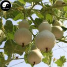 Buy Calabash Gourd Seeds 120pcs Plant Melo Lagenaria Siceraria Bottle Gourd
