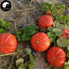 Buy Red Pumpkin Seeds 120pcs Plant Diabetes Vegetable Melon Cucurbita Moschata
