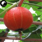 Buy Red Pumpkin Seeds 30pcs Plant Diabetes Vegetable Melon Cucurbita Moschata