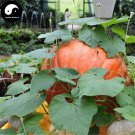 Buy Huge Pumpkin Seeds 30pcs Plant Diabetes Vegetable Melon Cucurbita Moschata